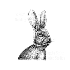 Peeking Hare - a pen and ink drawing of the bust of a New England Cottontail rabbit.